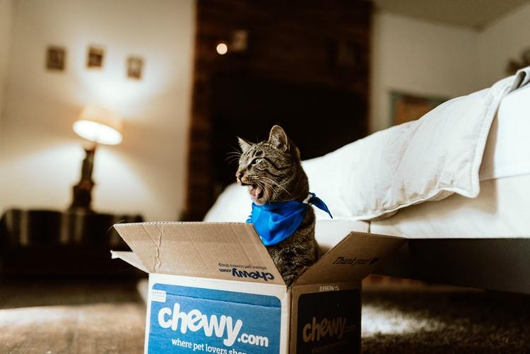 人工智慧合成喵星人,結果卻讓貓奴笑到噴飯!