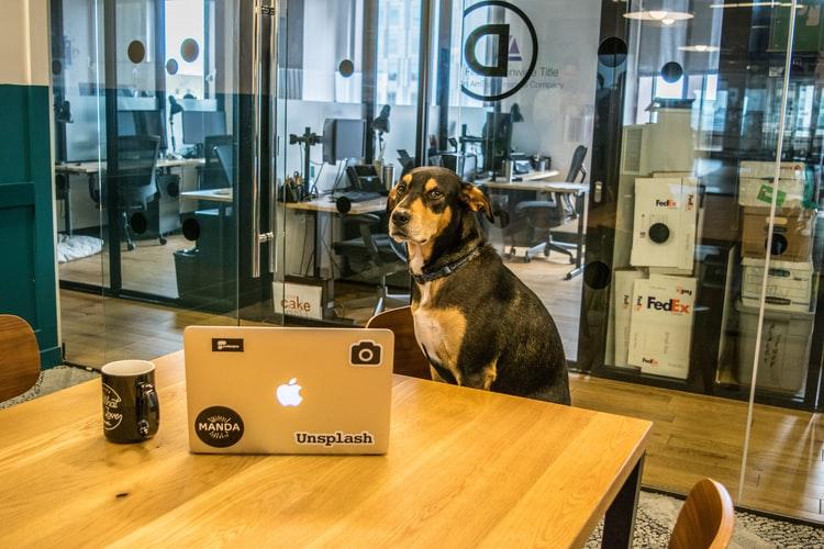 狗狗也能當老師!人工智慧機器人學會轉彎還會小跑步!(下)