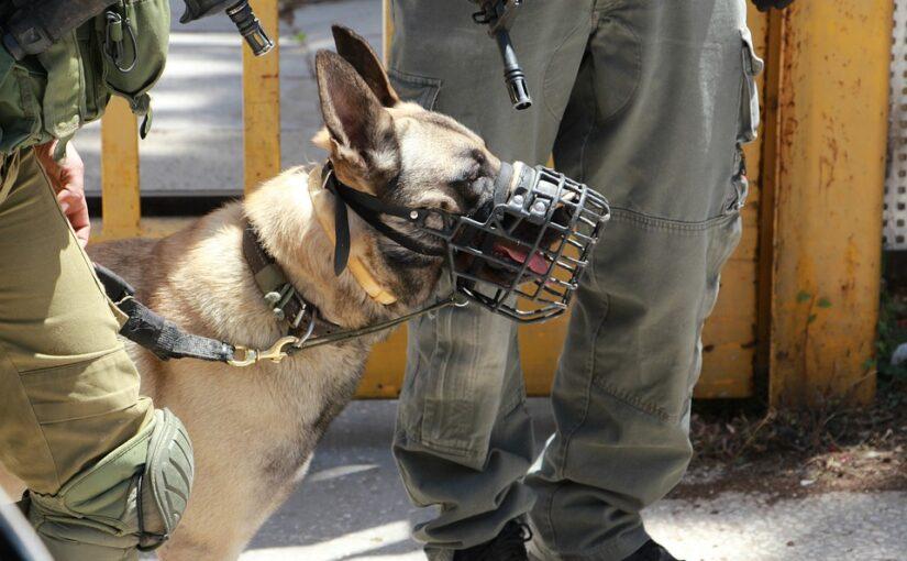 為軍中狗狗設計的AR裝備,遠端接受長官指令超輕鬆!
