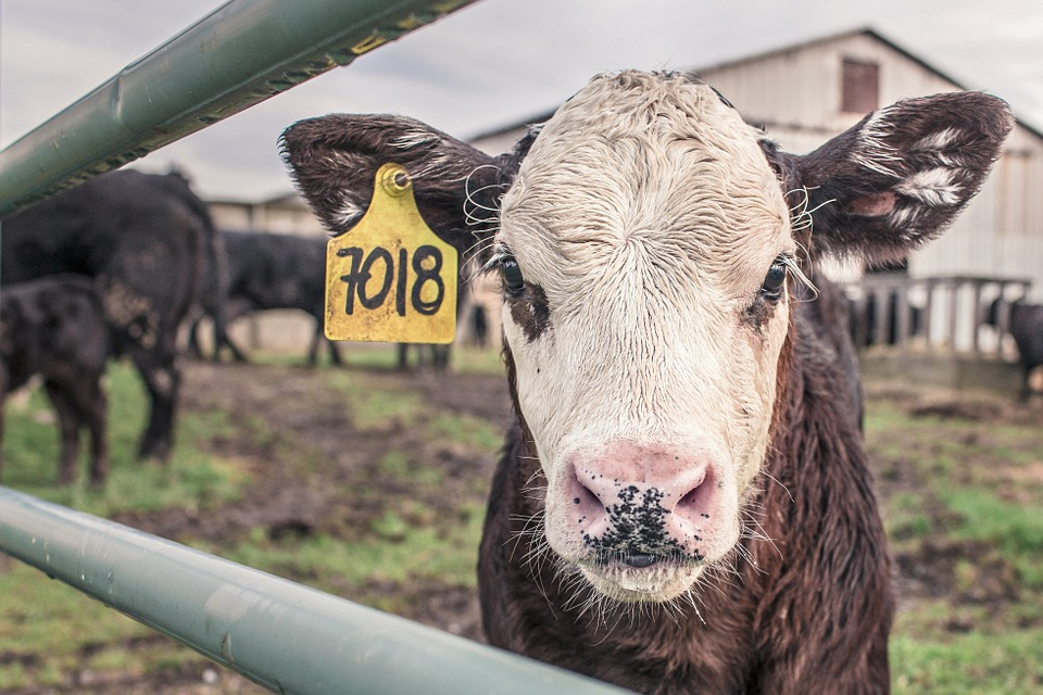 人工智慧帶領農牧業更創新-畜牧業篇